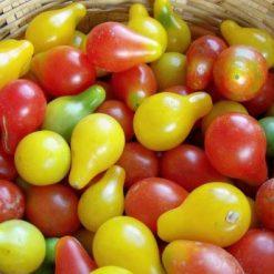 بذر گوجه فرنگی گلابی میکس