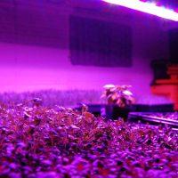 تاثیر نور LED بر گیاهان