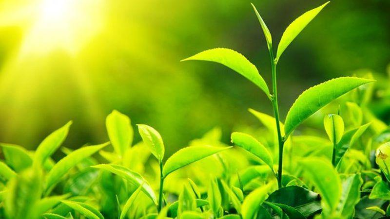 نور و تاثیر آن بر گیاهان