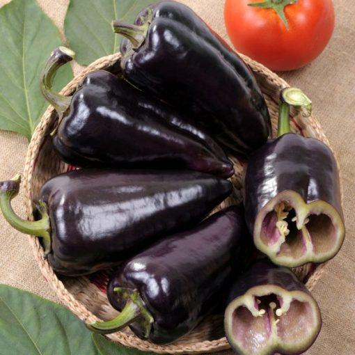 بذر فلفل جلاپینو مشکی
