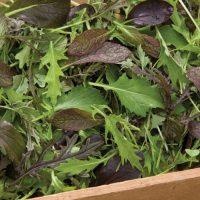 سبزی های مخلوط اعلا بسته بذر ۱۰۰ عددی