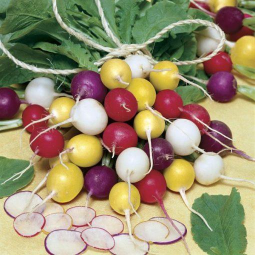 بذر تربچه هفت رنگ