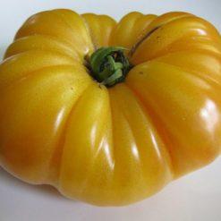 گوجه فرنگی آناناسی