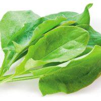 بذر سورل سبز