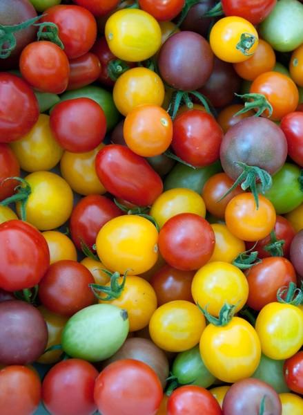 بذر انواع گوجه