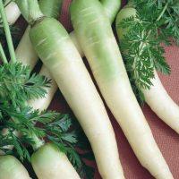 بذر هویج مهتابی