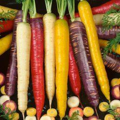 بذر هویج هیبرید رنگین کمان