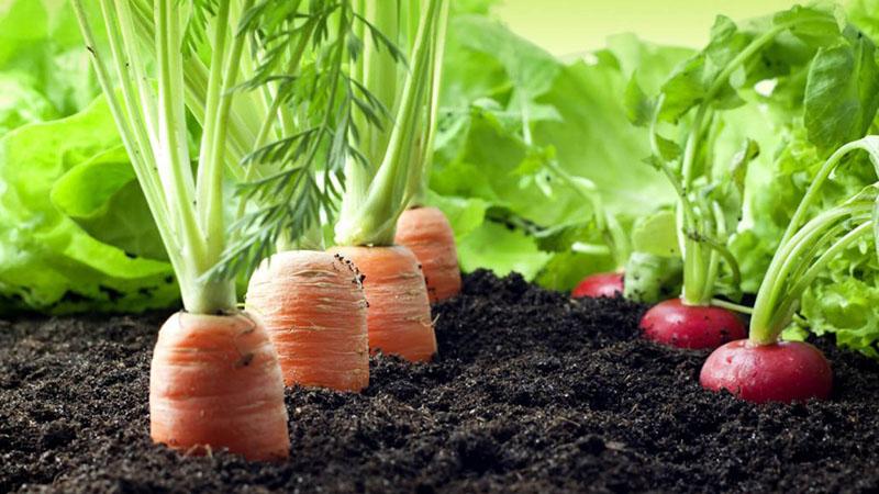 مکان مناسب کاشت سبزیجات