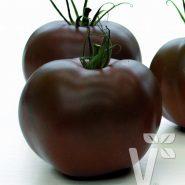 بذر گوجه فرنگی چری قهوه ای