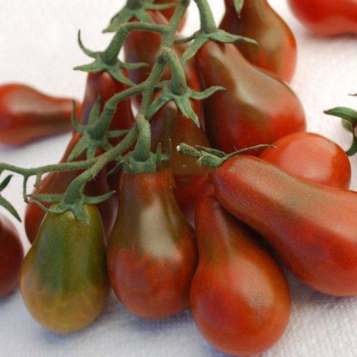 بذر گوجه فرنگی گلابی شکلاتی