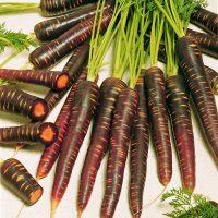 کشت بذر هویج بنفش