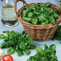 بذر سبزی والریانلا فرانسوی