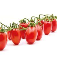 گوجه فرنگیخوشه ای داترینو