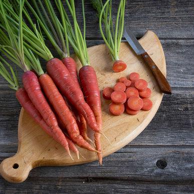 بذر هویج ناتری قرمز