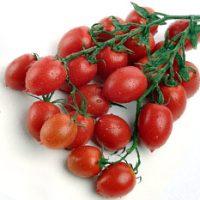بذر گوجه فرنگی چری زیتونی