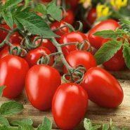 گوجه فرنگی روما