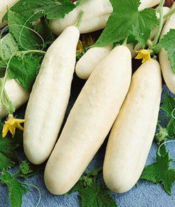 بذر خیار خاردار سفید