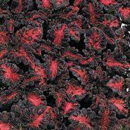 بذر حسن یوسف اژدهای سیاه