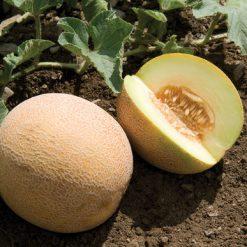 بذر خربزه آناناسی