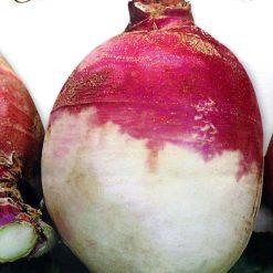 بذر شلغم ایتالیایی
