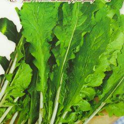 بذر راکولا دا اورت
