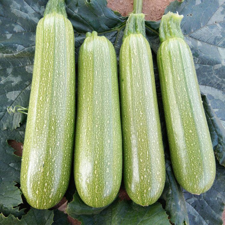 بذر کدو خورشتی سبز