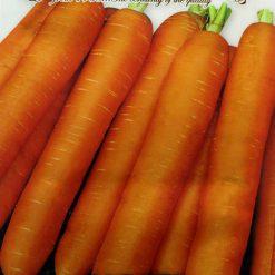 بذر هویج نانتس