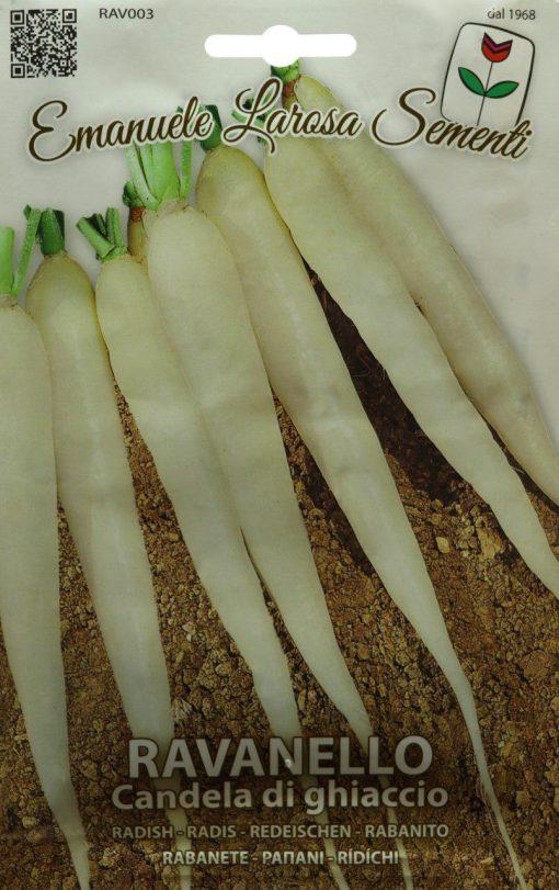 بذر ترب سفید