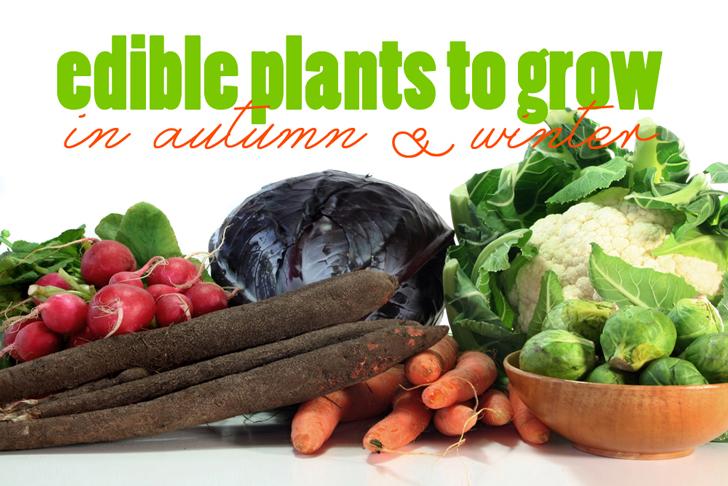 سبزیجات پاییزه