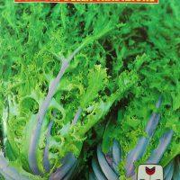 بذر کاهو کاسنی سالادی