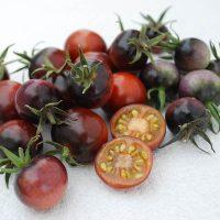 بذر گوجه فرنگی بلوبری
