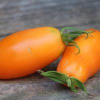 بذر گوجه فرنگی موزی نارنجی