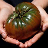 بذر گوجه فرنگی Black Krim