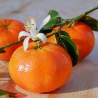 نهال نارنگی پیج