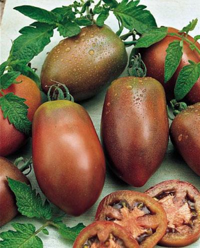 بذر گوجه فرنگی بنفش اوکراینی