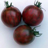 بذر گوجه فرنگی یاس بنفش