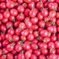 بذر گوجه فرنگی تخم مرغ صورتی
