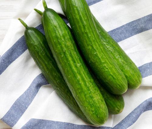 بذر خیار کالیپسو