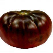بذر گوجه فرنگی برندی واین مشکی