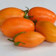 بذر گوجه فرنگی قندیل