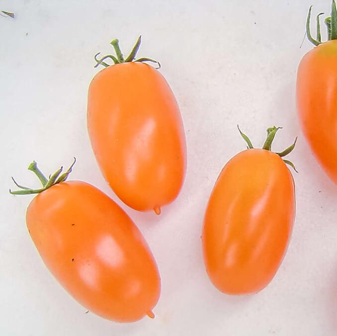 بذر گوجه فرنگی قندیل یخ الی