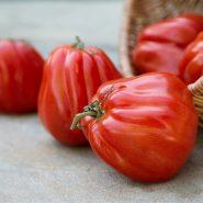 بذر گوجه فرنگی قرمز