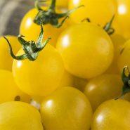 بذر گوجه فرنگی زرد توپاز