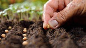 تکثیر گیاهان با بذر