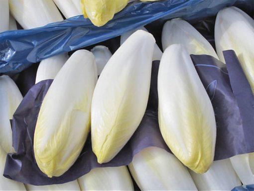 بذر کاهو کاسنی فرنگی