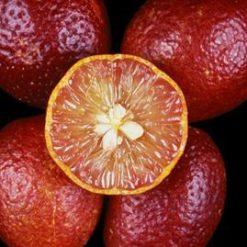 نهال لیمو ترش توسرخ