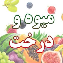خرید بذر میوه و درخت