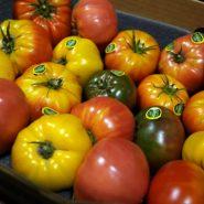 بذر گوجه فرنگی درشت