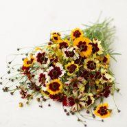 بذر گل اشرفی رنگارنگ