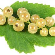 بذر انگور فرنگی سفید